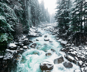 winter, nature, and water image