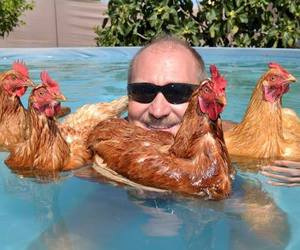 Chicken, cool, and pool image