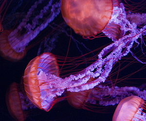 jellyfish, photography, and animal image