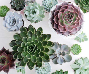 plants, succulent, and green image