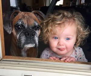 baby, dogs, and cute image