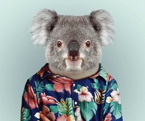 Koala, animal, and wallpaper image