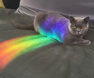 cat, colors, and cute image