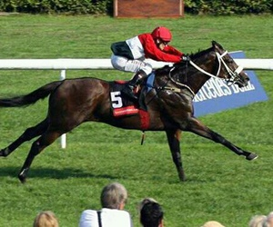 champion, horseracing, and racehorse image