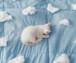 cat, blue, and kitten image