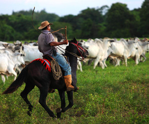 caballo, campo, and country image