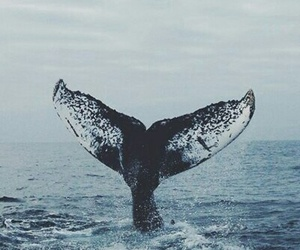 blue, whale, and ocean image
