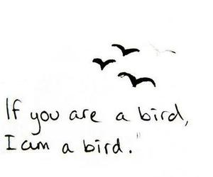 bird, love, and typography image