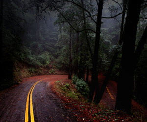 road, beautiful, and forest image
