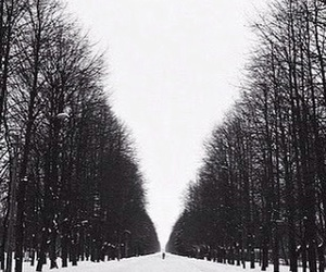 black, snow, and trees image
