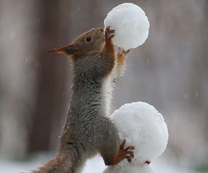 snow, squirrel, and winter image