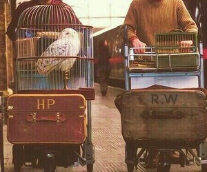 ron weasley, harry potter, and owl image