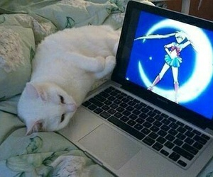 cat, sailor moon, and cute image