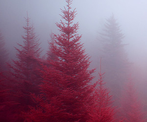 tree, red, and nature image