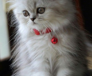 cats and kittylove image