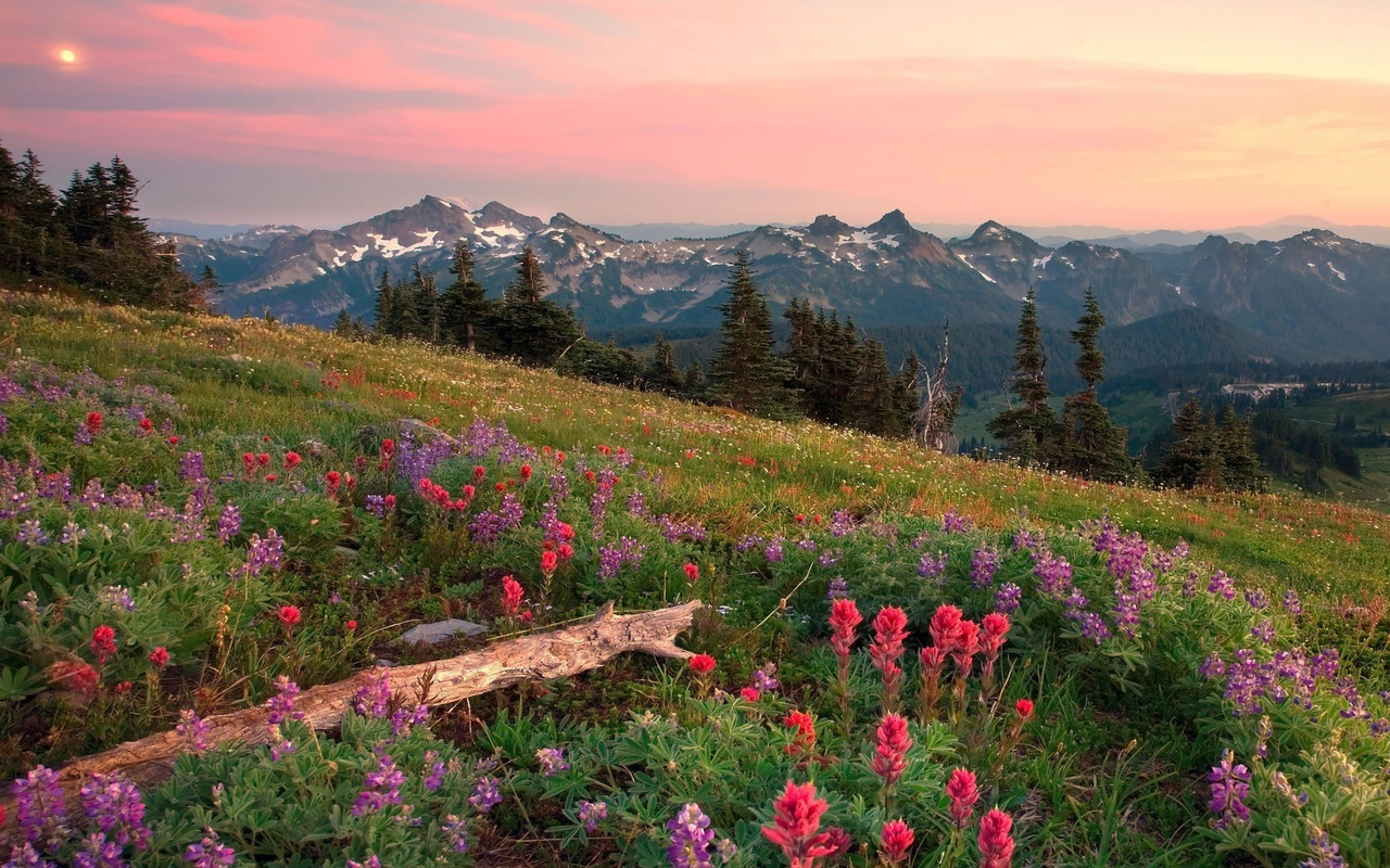 flowers, sky, and landscape image