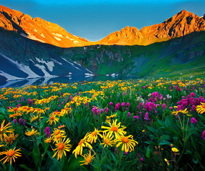 flowers, mountains, and landscape image