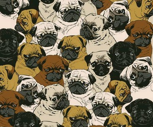 pug, dog, and wallpaper image
