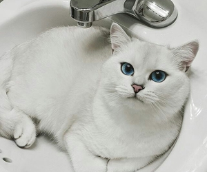 cat, animal, and white image