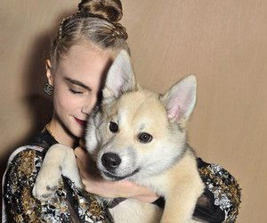cara delevingne and dog image