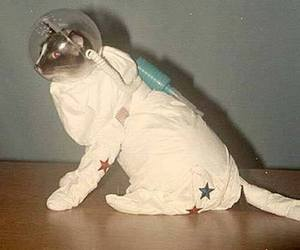 cat, space, and astronaut image