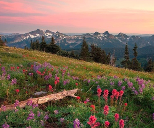flowers, mountains, and sky image