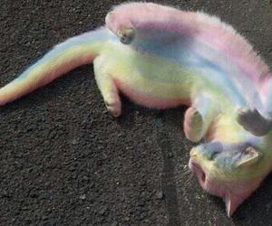cat, rainbow, and grunge image