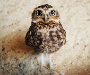 bird, brown, and cute image