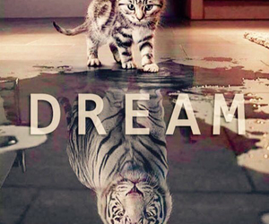 Dream, cat, and tiger image