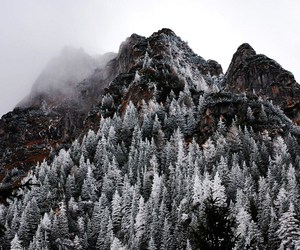 snow, trees, and forest image
