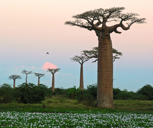 africa, madagascar, and nature image