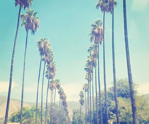 beautiful, palm trees, and globe trotter image