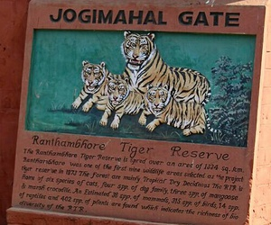 national park, tiger, and incredible india image