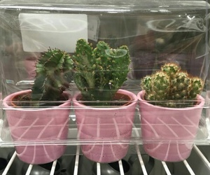 pink, plants, and cactus image