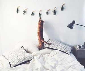 white, bed, and cat image
