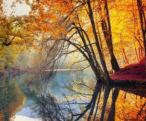 autumn, colors, and wood image