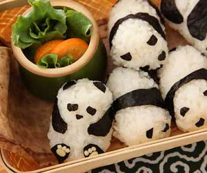 panda, food, and sushi image