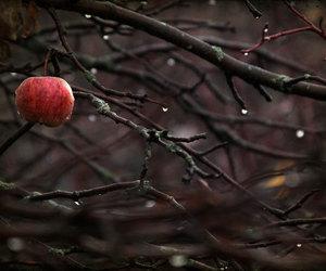 photography and rain image