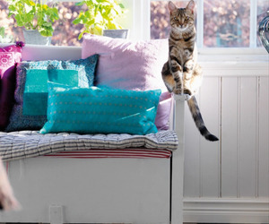 cat, animal, and pillow image