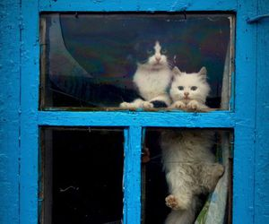 cat, window, and blue image