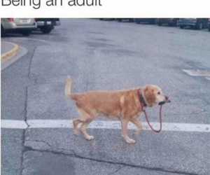 dog, funny, and Adult image