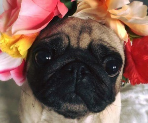 flowers, mops, and pink image
