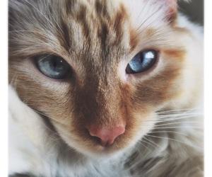 adorable, alternative, and blue eyes image