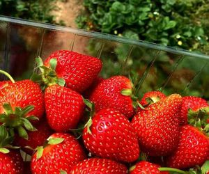 eat, food, and strawberry image