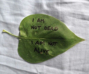 leaves, dead, and grunge image