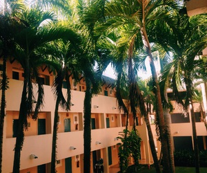 aesthetic, Dominican Republic, and palm trees image