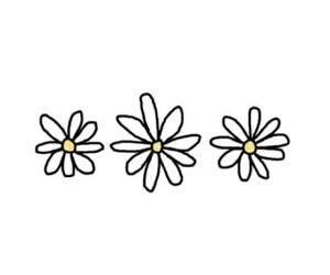 flowers, daisy, and overlay image