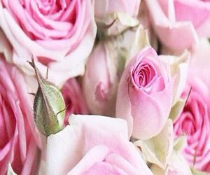 feminine, girly, and pink image