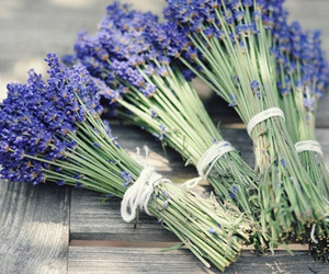 flowers, herb, and lavender image