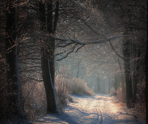 Sonne, winter, and wald image